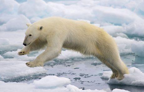 Russia risks Arctic for Indian coal exports