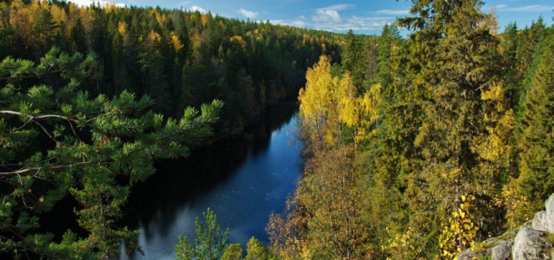 EU blunders on biomass: study