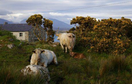 Ireland eyes 'green' gas to cut emissions